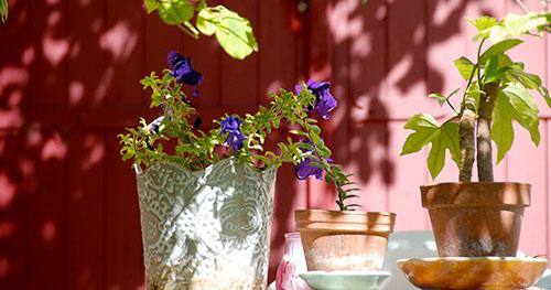 Gite Luberon Provence
